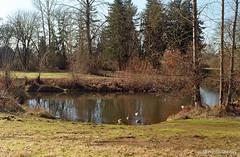 Eugene Science Center pond - film (JSB PHOTOGRAPHS) Tags: nikonsupercoolscan5000ed minoltaxgm 45mm 28 35mmfilm colorfilm film filmcamera filmisnotdead filmphotography ishootfilm kodakgold asa200 img642 img6422 eugenesciencecenter