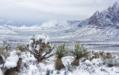 Red Rock Snow Day (magnetic_red) Tags: snow snowy white desert joshuatrees snowcovered mountains valley redrockcanyonnationalconservationarea publiclands americanwest nevada