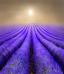 Lavender Fields at Sunrise (adrians_art) Tags: curves lines landscape uk england yellow blue green violet purple light golden silver nature patterns abstracts lavender fields plants flowers mistfog silhouetteshadows sunrisesunset skycloud