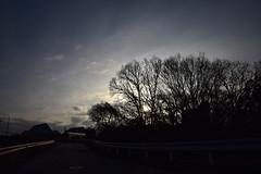 20190207_052_2 (まさちゃん) Tags: シルエット silhouette 光 樹木 ガードレール