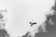 Heron (PeteMartin) Tags: arch artis bird bw flying heron infrared zoo
