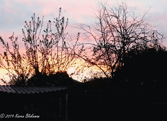 March 18th, 2019 Dawn (karenblakeman) Tags: cavershamgarden caversham uk dawn trees 2019 2019pad march reading berkshire sky