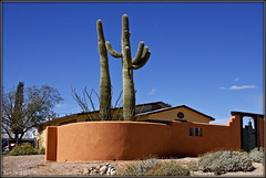Colored Wall (2bmolar) Tags: hww wallwednesday wall desert cactus saguro