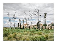 Barreiro, Portugal (Sr. Cordeiro) Tags: barreiro portugal margemsul árvoresmortas deadtrees ruínas ruins abandono abandonado devoluto abandoned panasonic lumix gx80 gx85 14140mm