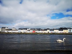 Cygnet at Claddagh Pier (mcginley2012) Tags: