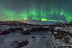Abisko Canyon Aurora (kevin-palmer) Tags: abisko sweden swedishlapland arctic march winter clear night sky stars starry space astronomy astrophotography aurora auroraborealis northernlights green cold snow snowy abiskoriver abiskocanyon cliffs flowing water birchtrees forest nikond750 sigma14mmf18 europe moonlight moonlit
