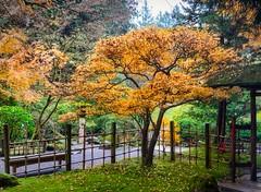 Zen Garden (BlinkOfALens) Tags: portland oregon unitedstatesofamerica us garden fallcolors autumn tree