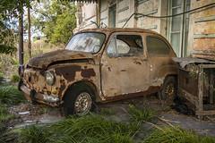 Abandonado (Ce Rey) Tags: abandono óxido oxidado rusty rust oldcar automóvil abandonado abandoned viejo decadencia decay grass fitito fiat fiat600 vehicle oldvehicle vehículo coche 15challengeswinner