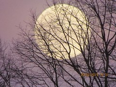 Moon rising. (daveandlyn1) Tags: moon trees branches eveningskies supermoon digitalcamera superzoom bridgecamera sx30is canonpowershotsxis canonsx30is canon