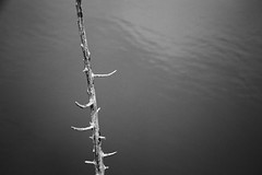 Water Stick (adamopal) Tags: canon canon5d canon5dmkiii canon5dmarkiii waterstick water stick lake lakeside walkabout nature outside extremeedit monochrome blackandwhite blackwhite black white