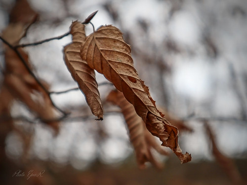 Leaves Winter