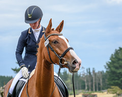 Alaasan Wanderstarr - Sarah Gray (danniearmstrong) Tags: 2019 ruby simcleanssarah warmblood mare chestnut equine sport equestrian dressage