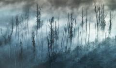 Castro Valente (Noel F.) Tags: sony a7r a7rii neboa fog mist castro valente galiza galicia padron eucalyptus eucalipto