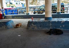 Despues del ferry (Nebelkuss) Tags: santorini puertonuevo newharbour islasgriegas greekislands cicladas cyclades perros dogs callejeras street candid espontanea fujixpro1 fujinonxf23f14 momento moment instante instant