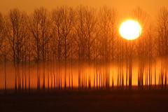 De l'aube au crépuscule (2/3) - from dawn to dusk (2/3) (gopillentes) Tags: arbres aube brouillard brume champs ciel givre herbes hiver lumière soleil trees troncs trunks silhouettes mist misty fog fields winter sun shadows ombres onirique dream perfection light orange