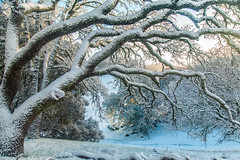 (Marc Crumpler (Ilikethenight)) Tags: landscape usa california bayarea sfbayarea eastbay contracostacounty livermore morganterritory marccrumpler eastbayregionalparkdistrict ebparksok ebrpd snow winter cold trees hiking sunrise