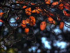 Colors of Autumn (Wolfgang Wiggers) Tags: automn leaves foliage light