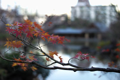 autumn, Tokyo, Japan (Plan R) Tags: park autumn fall leaf leaves tree leica m 240 summilux 35mm