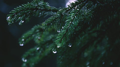 After rain (an_tarasova) Tags: norway forest tree wood rain water tear green nature inspiration
