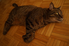 DSC01094 (iocatco) Tags: cat kitten cats sony a7