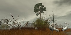 pelicans (jo jung) Tags: secondlife animals pelicans landscape nature countryside fauna