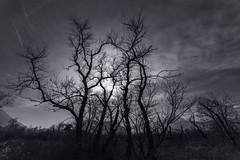 (Jacques Isner) Tags: plainedereymure islesdudrac isère contrejour ciel cloud arbres samyang14mm samyang pentax pentaxart pentaxflickraward pentaxk1 jacquesisner