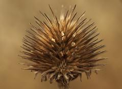 artefakt (stempel*) Tags: polska poland polen polonia gambezia pentax k30 garden macro makro