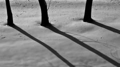 Winter shadows (superhic) Tags: winter snow shadow shadows abstract zima sneg senke tree drvo