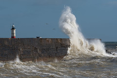 Dwarfing (sarah_presh) Tags: newhaven eastsussex uk england sea outdoor wall wave crashing stormgareth seagull ocean lighthouse harbour