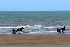 Entrainement sur la plage (Barnie76@ ,Peu disponible + jours) Tags: chevaux sulky entrainementchevaux plage blonvillesurmer mer côtefleurie paysage