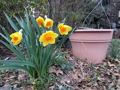 2019-03-20 19.21.16 (littlereview) Tags: potomac flower maryland 2019 littlereview spring blog