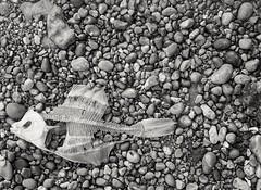 (Dan_jOnEs18) Tags: 35mm 35mmfilm olympuspen ilfordfilm ilford hp5 folkestone hc110 kodak bnw black white monochrome