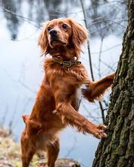What are them squirrels at?! • • • • • #pies #discoverpoland #exploremore #destinationearth #welivetoexplore #weeklyfluff #backcountrypaws #polska #keepitwild #awesome_earthpix #roamtheplanet #petsofinstagram #lovepoland #theoutbound #discoverglobe #insta (watson_the_adventure_dog) Tags: what them squirrels at • pies discoverpoland exploremore destinationearth welivetoexplore weeklyfluff backcountrypaws polska keepitwild awesomeearthpix roamtheplanet petsofinstagram lovepoland theoutbound discoverglobe instagoodmyphoto doglover instapoland getoutstayout earthofficial ilovemydog heelergram visitpoland stayandwander theglobewanderer earthfocus dogsofig
