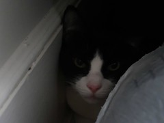 Pet Colours - Milo in the Closet (Pushapoze (MASA)) Tags: pets animauxdecompagnie rosie milo chien chat dog cat