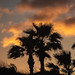 Lovely Florida Evening, with Silhouettes