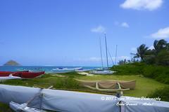 OAHU-HAWAII_1D52149-01 (Donna Molinari Photography) Tags: sanjose ca usa
