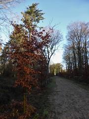 Beukenlaan renewed, Gaasterland (Alta alatis patent) Tags: gaasterland landscape trail beukenlaan renewal