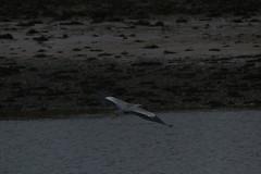 IMG_5186 (monika.carrie) Tags: monikacarrie ythan wildlife scotland