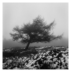 FILM - A tree on White Edge (fishyfish_arcade) Tags: 6x6 analogphotography bw blackwhite blackandwhite filmphotography filmisnotdead istillshootfilm kodak monochrome sheffield tlr trix twinlensreflex yashicamat124g analogcamera film mediumformat mono whiteedge peakdistrict snow tree landscape