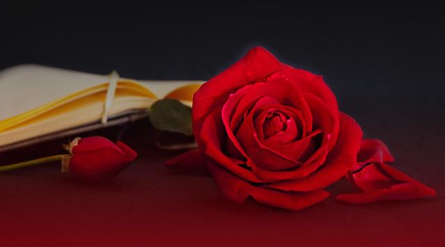 Обои стиль, розы, лепестки, книга, бутоны картинки на рабочий стол, раздел цветы - скачать