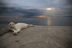 Manila bay.Philippines (VincenzoMonacoo) Tags: canon 6d tamron 2470 philippines travel adventure leica nikon manila cat sea