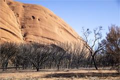 Base Walk @ the Uluru (:: Blende 22 ::) Tags: tree baum australia australien nothernterritory outback olgas katatjuta uluru ayersrock basewalk redrocks redcentre rocks bluesky canoneos5dmarkiv ef2470mmf28liiusm