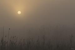 Amanecer en El Hondo (Antonio Lorenzo Terrés) Tags: amanecer sol sun niebla fog parque natural paisaje dawn countryside nature españa spain elhondo invierno winter canon 100400 7d