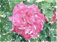 Menschenfurcht, und Furcht vor Sünden (amras_de) Tags: rose rosen ruža rosa ruže rozo roos arrosa ruusut rós rózsa rože rozes rozen roser róza trandafir vrtnica rossläktet gül blüte blume flor cvijet kvet blomst flower floro õis lore kukka fleur bláth virág blóm fiore flos žiedas zieds bloem blome kwiat floare ciuri flouer cvet blomma çiçek zeichnung dibuix kresba tegning drawing desegnajo dibujo piirustus dessin crtež rajz teikning disegno adumbratio zimejums tekening tegnekunst rysunek desenho desen risba teckning çizim