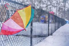 Colour Pop (flashfix) Tags: april092019 2019inphotos flashfix flashfixphotography ottawa ontario canada nikond7100 40mm bokeh umbrella colours rainbow snow fallingsnow spring nature fence lines repetition oldmanwinterisajerk