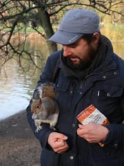 Squirrel (Vineyards) Tags: london england squirrel grijzeeekhoorn sciuruscarolinensis stadspark easterngreysquirrel scatterhoarder cashewnoten cashew stjamesspark londen
