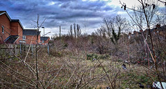NOW Great Central Railway Leicester 9th January 2019 (loose_grip_99) Tags: leicester leicestershire eastmidlands england uk nature greatcentral railway railroad rail disused abandoned gcr south goods shed mpd depot light pole trains railways january 2019