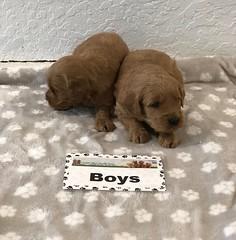 Dakota Boys 1-19
