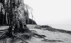B+G (Beeches by the sea) (frahurk) Tags: ostsee nienhagen gespensterwald balticsea gespensterwaldnienhagen steilküste forest coast warnemünde kühlungsborn mecklenburgvorpommern meer schwarzweis blackandwhite bw küste buchen buchenwald