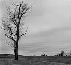 (Burnt Cheerios) Tags: bw pixel2 google blackandwhite nature lone tree contrast yorkpa
